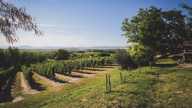 Ungerns Viner